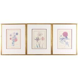 Three Flora Identification Watercolor Paintings