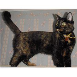 Cliché : Le chat d'Artiste LangdonArt - The LangdonArt cat photo