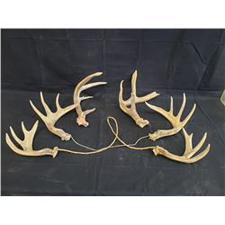 SET OF 3 ANTLERS VARIOUS SIZES NO RESERVE