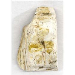 Large Indonesian Petrified Wood Specimen