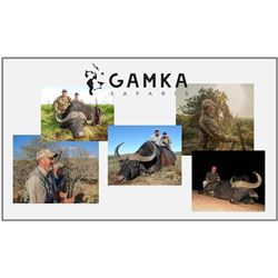 7-Day Buffalo Hunt in Eastern Cape South Africa for One (1) Hunter