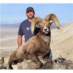 2021 Utah Box Elder, Newfoundland Mtns. Rocky Mtn. Bighorn Sheep Conservation Permit (Late)