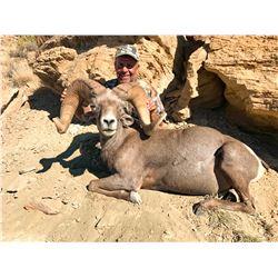 2021 Utah Statewide Desert Bighorn Sheep Conservation Permit