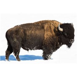 PHILMONT SCOUT: 3-Day American Bison Hunt for One Hunter and One Non-Hunter in New Mexico - Includes