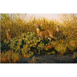 "BRUCE MILLER: ""South Texas Whitetails"" - Original Artwork by Wildlife Artist Bruce Miller"