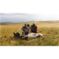 ALEUTIAN ADVT: 6-Day Trophy Reindeer Hunt for One Hunter on Umnak Island in the Alaskan Peninsula -