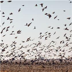 SIERRA BRAVA: 4-Day High-Volume Dove Hunt for Twelve (12) Hunters in Argentina