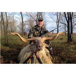 SAFARI INTL: 5-Day Racka Sheep Hunt for One Hunter and One Non-Hunter in Macedonia - Includes Trophy