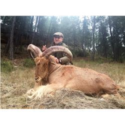 TROPHY TRAILS: 5-Day Big Game Hunt for Two Hunters in Spain - Includes Trophy Fees