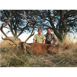 ARGENTINA-SPAIN /GBH SAFARIS: 4-Day Red Stag and Wild Sheep Hunt for Two Hunters in Argentina - Incl