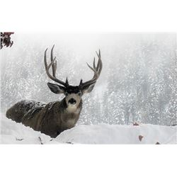 BC TROPHY MTN OUTFITTERS: 7-Day Mule Deer Hunt for One Hunter in SW British Columbia, Canada - Inclu