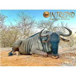 INTREPID SAFARIS AFRICA: 7-Day Blue Wildebeest and Zebra Safari for One Hunter and One Non-Hunter in