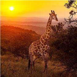 ZULU NYALA: 6-Day/6-Night Photo Safari for Two Adventurers in South Africa