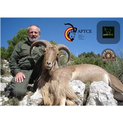 4 - DAY AOUDAD OR MOUFLON SHEEP HUNT FOR 1 HUNTER IN SPAIN