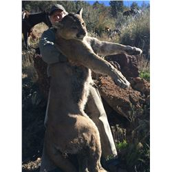 6 - DAY MOUNTAIN LION HUNT FOR 1 HUNTER IN ARIZONA