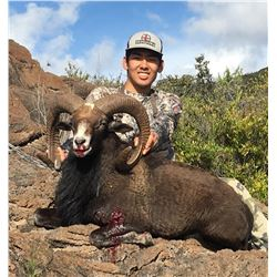 2-DAY HUNT FOR HYBRID EUROPEAN MOUFLON/HAWAIIAN SHEEP FOR 1 HUNTER AND 1 DAY DEEP SEA FISHING FOR UP