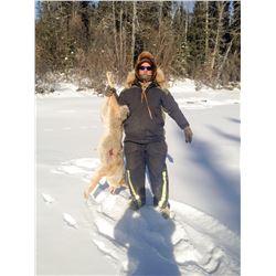 7 - DAY WINTER PREDATOR HUNT IN ALASKA FOR 1 HUNTER