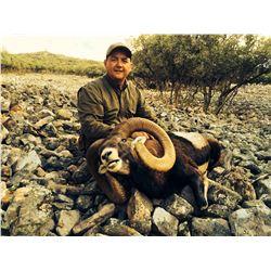 4-DAY 2 IBERIAN MOUFLON SHEEP HUNT FOR 2 HUNTERS IN SPAIN