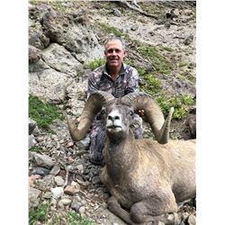 WYOMING ROCKY MOUNTAIN BIGHORN SHEEP LICENSE