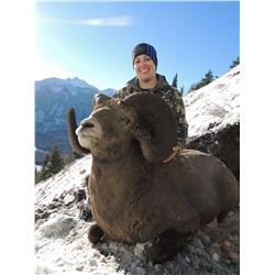 BRITISH COLUMBIA MOUNTAIN SHEEP SPECIAL HUNTING PERMIT