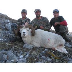 10 - DAY 1X1 FANNIN OR DALL'S SHEEP HUNT IN THE YUKON