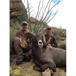NEW MEXICO DESERT BIGHORN SHEEP