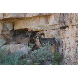 TEXAS - DESERT BIGHORN SHEEP PERMIT