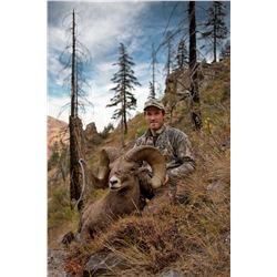 STATE OF WASHINGTON CALIFORNIA BIGHORN SHEEP