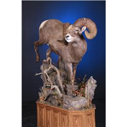 LIFE-SIZE WILD SHEEP MOUNT WITH BASE
