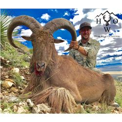 3 1/2 DAY AOUDAD HUNT FOR 1 HUNTER IN WEST TEXAS