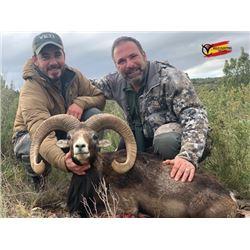 WED-12 Iberian Mouflon Hunt, Spain