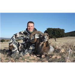 TH-27 Iberian Mouflon Hunt for Two Hunters, Spain