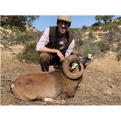 TH-32 Iberian Mouflon Sheep Hunt, Spain
