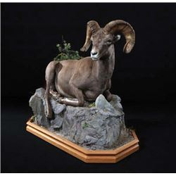 FR-09 Life-Size North American Sheep Mount