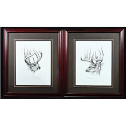 FR-50 Whitetail Deer Art (Set of Two)