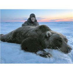 SA-06 Barren Ground Arctic Grizzly Hunt