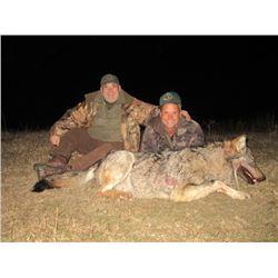 SAFARI ART: Wolf Hunt in Macedonia for 2 Hunters
