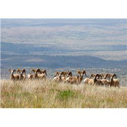 TEXAS PARKS AND WILDLIFE: Texas Bighorn Photo Safari for up to 4 People on Elephant Mountain Wildlif