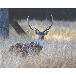 JOSHUA CREEK RANCH: 3 Day/2 Night Axis Hunt for 1 Hunter in the Heart of Texas