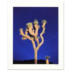 Joshua Tree by Sheer, Robert