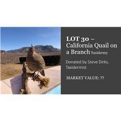 California Quail on a branch