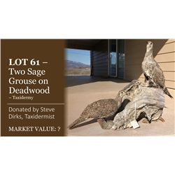 Display of two sage grouse on deadwood