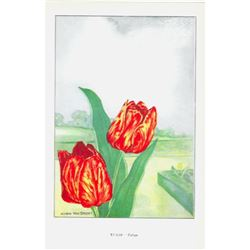 1920's Tulip Color Lithograph Print