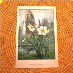 1920's Narcissus Color Lithograph Print