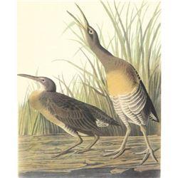 c.1950 Audubon Print, Clapper Rail