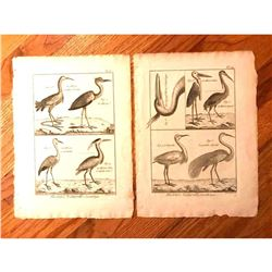 Pair of 18thc French Copperplate Engravings, Herons & Cranes