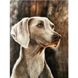 21stc Photorealism Oil Painting, Weimaraner, Hunting Dog