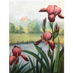 1920's Iris Color Lithograph Print