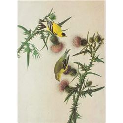 c1946 Audubon Print, #33 Goldfinch