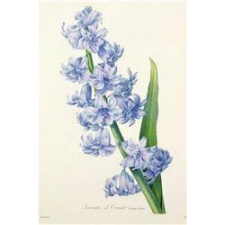 After Pierre-Jospeh Redoute, Floral Print, #66 Hacinthe d'Orient (Hyacinth)